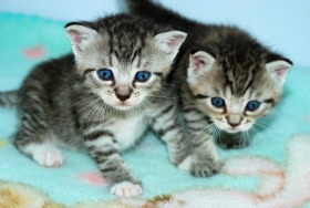 Natural Flea Remedy For Kittens
